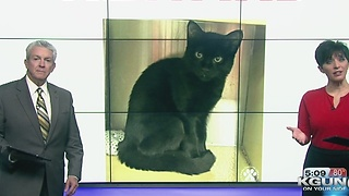 Police: Cat stolen from Oro Valley pet store - Video