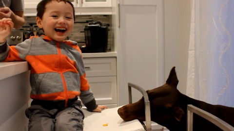 Boy laughs hysterically at his silly doberman
