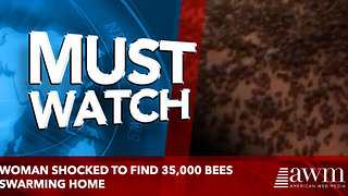 Woman shocked to find 35,000 bees swarming home - Video
