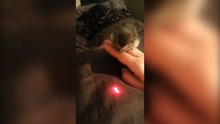 Baby Bird Loves Laser Pointer - Video