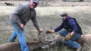 Deer need to be rescued after getting their antlers stuck together
