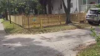 Digital Short: Tampa police using tool to fight squatters - Video