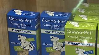 Las Vegas dispensaries sell hemp products that may help dogs frightened by fireworks - Video