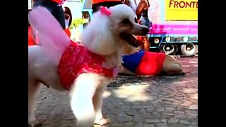 Brazilian Dog Parade - Video
