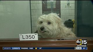 MCACC waiving adoption fees July 1 & 2 - Video