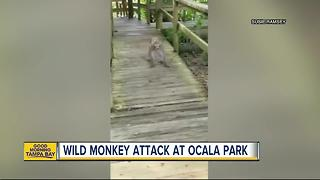 Family attacked by wild monkeys at Florida's Silver Springs State Park - Video