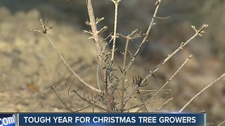 Tree farmers hoping for snow - Video