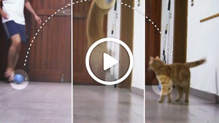 Sissi The Red Cat - The best goalkeeper in meow world! - Video