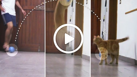Sissi The Red Cat - The best goalkeeper in meow world!