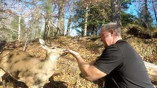 Wild deer casually allows human to hand-feed it - Video
