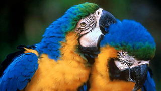 Parrot Dating Agency Is Open For Business