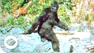 Does Bigfoot Exist? - Video