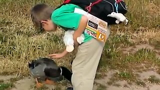 Duck Amazingly Greets Human Friend Everyday After School