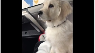 Moving Windshield Wipers Put Confused Puppy Into Hypnotic Trance