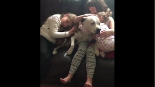 Even after suffering abuse, dog just wants to be loved - Video