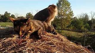 Monkey's Morning Routine Includes Playtime With Cat - Video