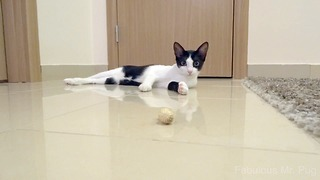 Cat vs. Peanut - Video