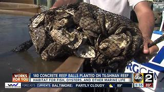 140 concrete reef balls planted on Tilghman Reef - Video