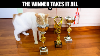 Cat wins International Cat Show, eats out of trophies - Video