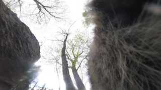 Cheeky Raccoon Steals GoPro, Thinks It's Food - Video