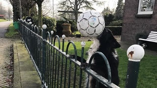 Creative dog does everyone in the neighborhood play ball with her LOOK HOW! - Video