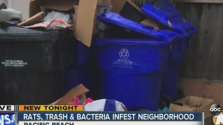 Rats, trash, bacteria infest neighborhood - Video