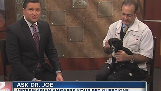 Dr. Joe visits 2 Works for You midday to answer pet health questions - Video