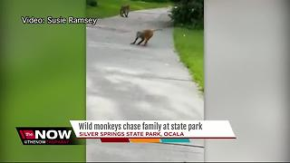 Wild monkeys attack family at Florida state park - Video
