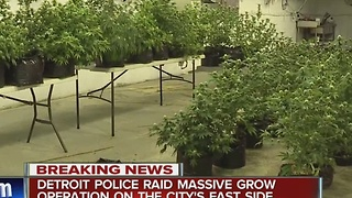 Detroit police bust illegal marijuana grow operation - Video