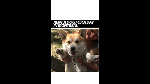 Rent A Dog For A Day In Montreal