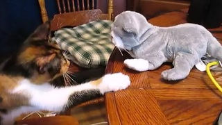 Karate kitten battles stuffed animal - Video
