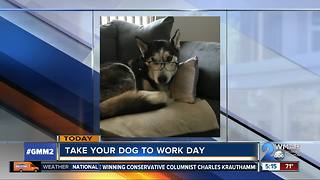National Bring Your Pet to Work Day