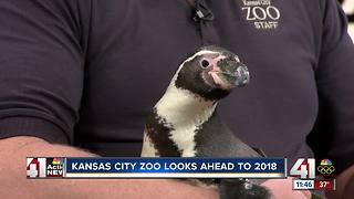Kansas City Zoo looks ahead to 2018 - Video