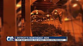 DPD discovers $127K marijuana grow operation across street from 11th precinct - Video