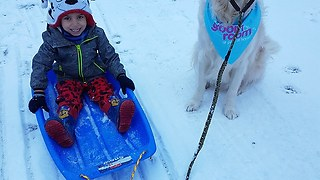 Dog enthusiastically pulls little boy in sled