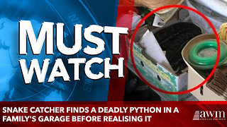snake catcher finds a deadly python in a family's garage before realising it - Video
