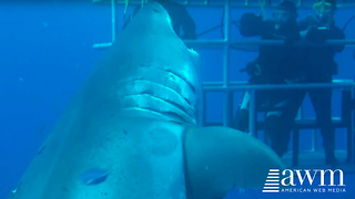Terrifying Footage Of The Largest Shark Ever Caught On Film Goes Viral - Video