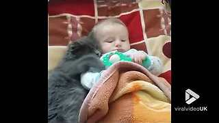 Fluffy Gray Kitten And Baby Boy Mock-Squabble Over A Toy - Video