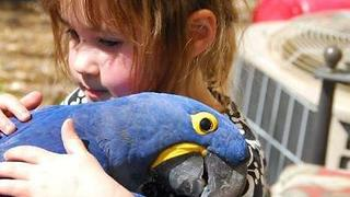 Get Your Bird To Petted Today ! - Video