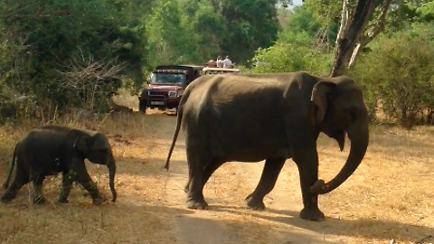 Rush Hour on Safari - Baby Elephant Emerges From The Bush