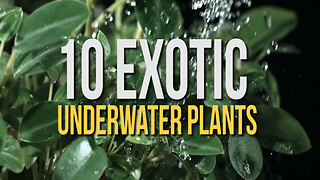 10 Exotic Underwater Plants - Video