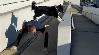 Agile dog practices parkour with owner