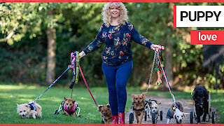 Woman dubbed 'miracle worker' after getting paralysed pooches walking again