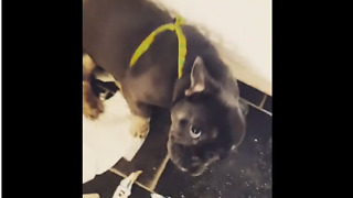 Puppy Makes Gigantic Mess After Being Left Alone