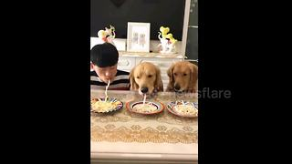 Dogs defeat owner in noodle-eating competition - Video