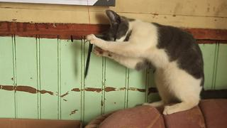 Farm kitten exposes her scheduling difficulties - Video