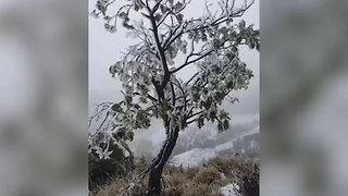 Hawaii Sees Rare Winter Snowstorm