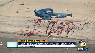 Two pit bulls quarantined after killing small dog - Video