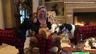Festive pets open their Christmas presents