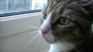 Precious Cat Chases Away Another Cat - Video
